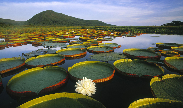 Fundo Amazonia